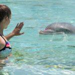 Marineland_Lagoon_dauphins_antibes